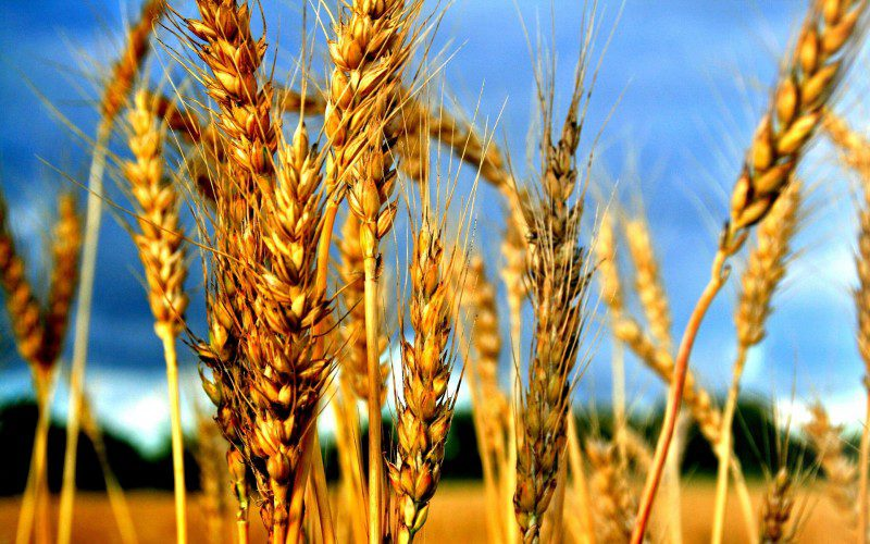 cereal_production